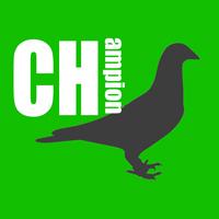ファンダイク系重近親鳩で中距離ナンバーワン 再び―― 日暮義一鳩舎