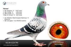 NL10-1221795 Romee bewerkt3