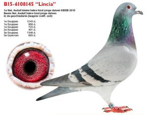 lambrechts-stefaanb15-6108145-lincia_0